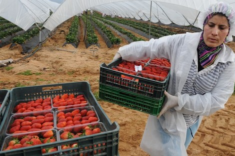 Moroccan Female Workers in Spain Live Ongoing Strawberry Field Nightmare