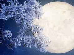 When and How to See the Full Flower Moon, the Last Supermoon of 2020