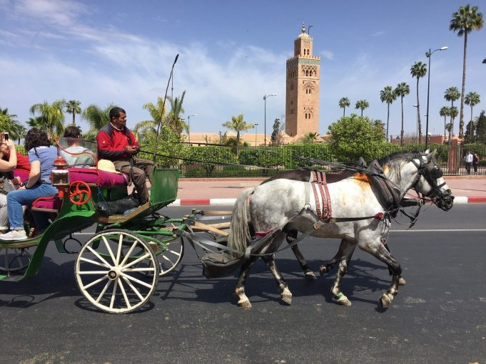 Travel Agencies Present Pathway of Recovery for Moroccan Tourism