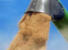 Morocco Suspends Customs Duties on Wheat Beyond June 15