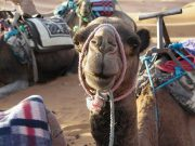 'Travel Daily News' Spotlights Morocco as Top Post-Pandemic Destination