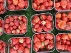 Moroccan Red Berry Producers Outcompete Spanish Offerings