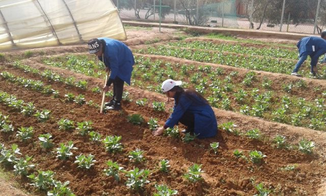 Morocco Invests $36 Million to Assist Farmers Affected By Drought