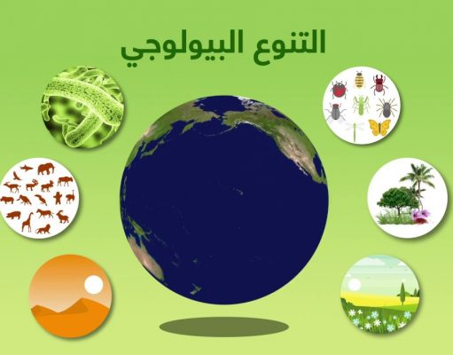 Video: Morocco Celebrates World Environment Day