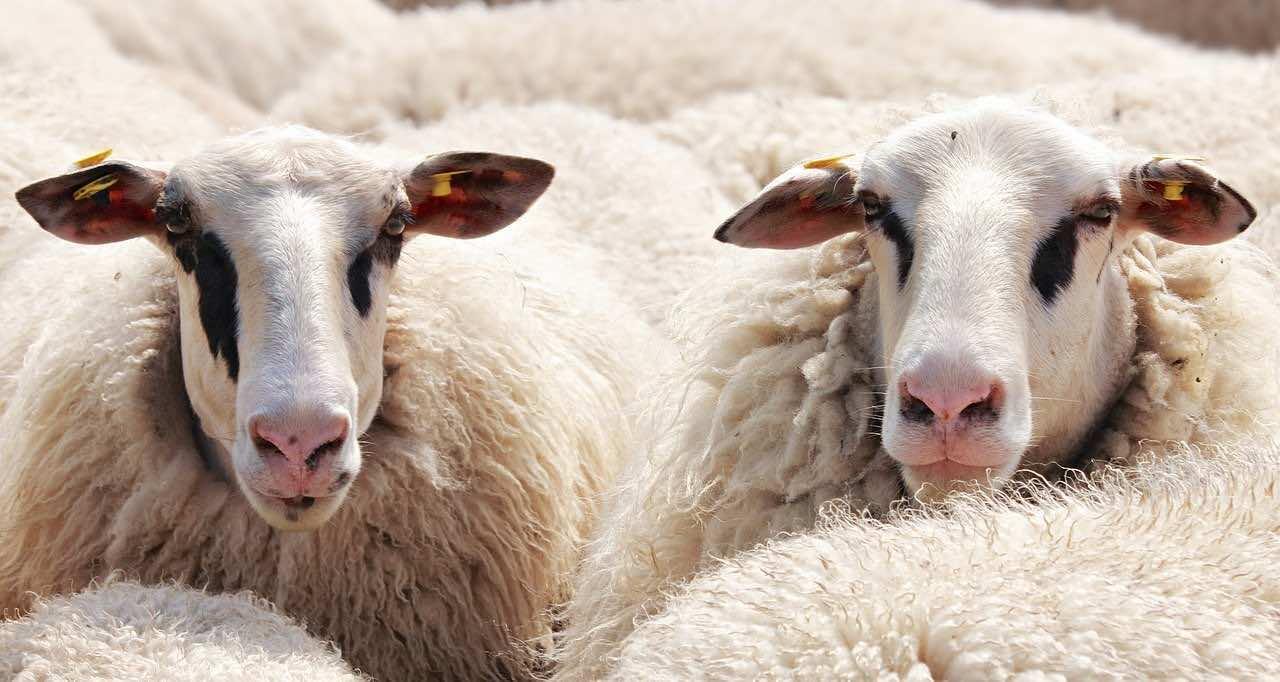 5 Ways to Have a Healthy Eid Al Adha Amid the COVID-19 Pandemic