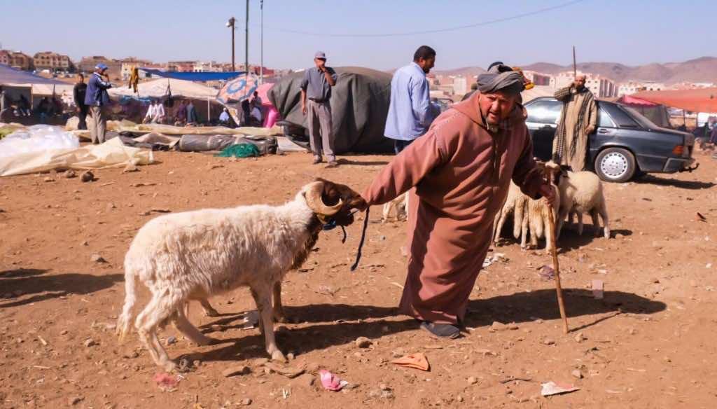 A Moroccan man in a djellaba and his Eid Al Adha sheep Photo Credit Kristen Gianaris for MWN