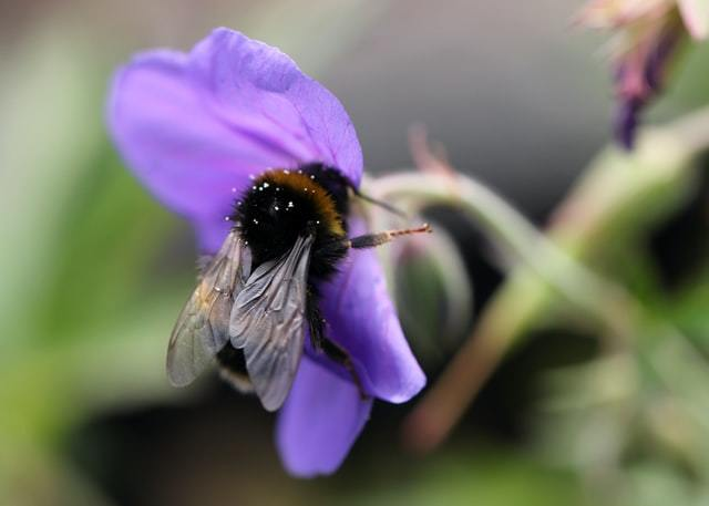Do not step on a bee day aims to preserve the global bee population