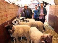 Eid Al Adha Preparations Start in Morocco Amid COVID-19 Crisis
