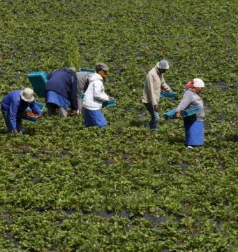 How Credit Agricole Continues to Assist Morocco's Farmers (2)