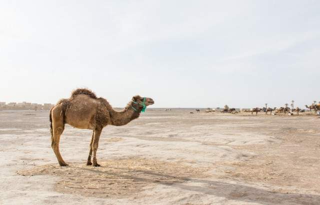 Marooned in Morocco: An Asian American's Experience