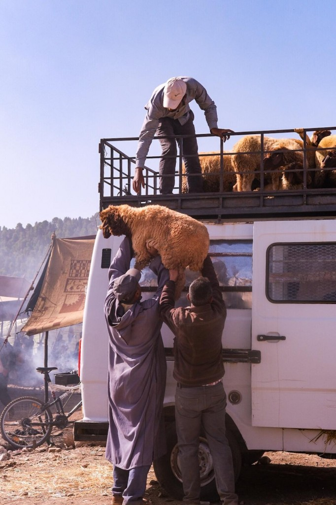 Men load sheep onto a car for Eid Al Adha in Morocco Photo Credit Kristen Gianaris for MWN