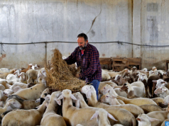 Morocco Closes 7 Livestock Markets for Breaching COVID-19 Preventive Measures
