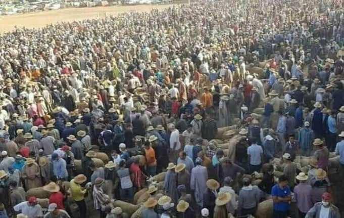 Videos Show Mask Negligence at Moroccan Livestock Markets Prior to Eid Al Adha
