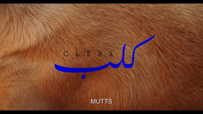 Short Film on Moroccan Animal Sanctuary Features in Sao Paulo Festival
