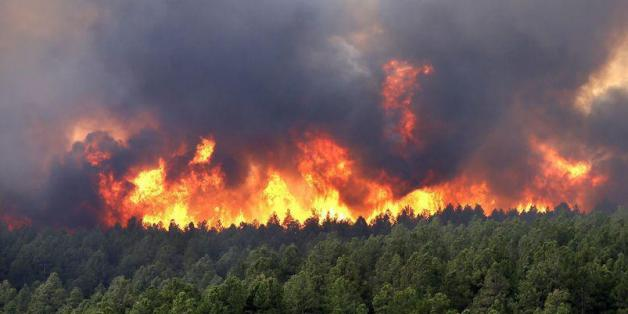 Fire Destroys 1,024 Hectares of Forest in M'diq, Northern Morocco