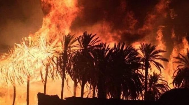 Fire Ravage an Oasis in Guelmim South Morocco