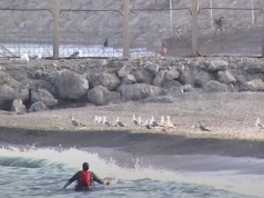 Video Moroccan Woman Stranded in Ceuta Swims Back to Morocco