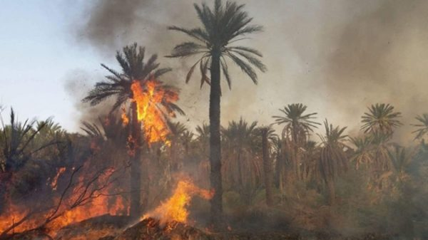 Wildfires in Morocco - Fire Ravages Date Oasis Near Errachidia