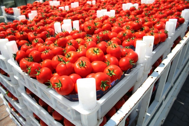 Morocco Expects Agri-Food Exports to Increase by 10%