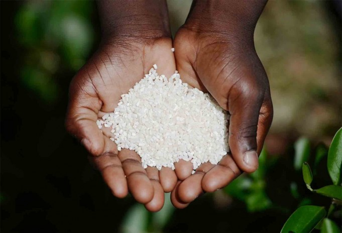 OCP Africa to Support Rice, Millet Sectors in Cote d'Ivoire, Senegal