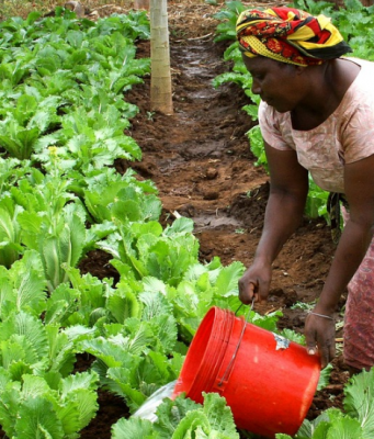 Morocco's OCP, AfDB Devote $4 Million to Boost Agriculture in West Africa