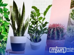 The 5 Best Indoor Plants for Beginners to Brighten Any Living Space