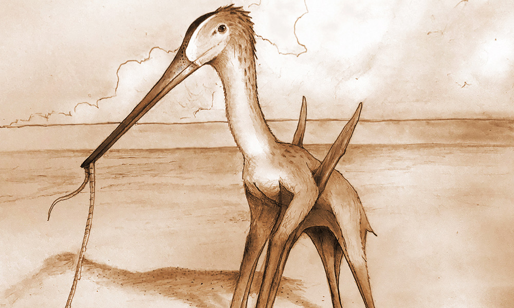 Scientists Discover 'Remarkable' Small Flying Dinosaur in Morocco
