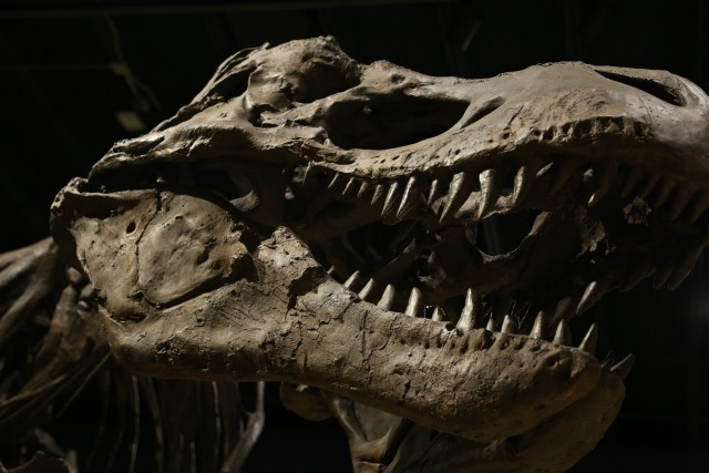 Ajnabia Odysseus: Paleontologists Unearth New Dinosaur Fossil in Morocco
