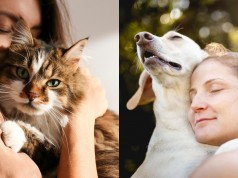 Benefits of Pet Ownership_ 6 Reasons Why You Should Adopt A Pet