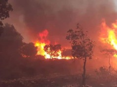 Algeria: Deadly Forest Fires Possible Result of Criminal Acts
