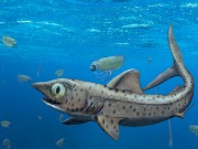 Ferromirum Oukherbouchi Ancient Moroccan Shark Leads to New Discovery