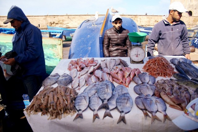 Morocco's Fish Exports Record 7% Annual Increase as of September 2020