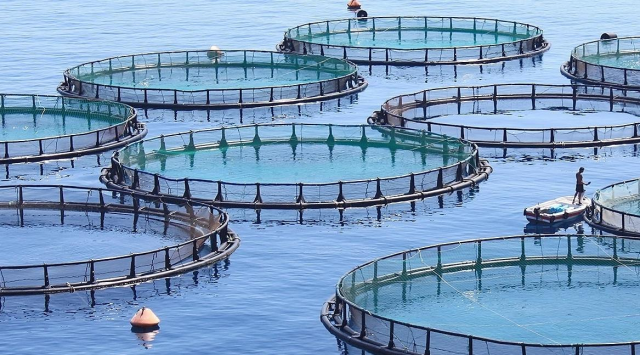 Morocco's Souss-Massa Region to Launch 24 Aquaculture Projects