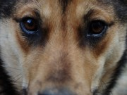 Morocco Considers Sterilization to Reduce Stray Dog Population