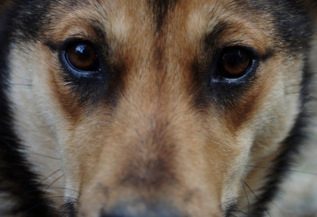 Morocco Considers Sterilization to Reduce Stray Dog Population