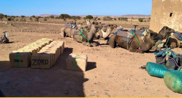 Morocco Aborts Drug Smuggling Operation on 10-Camel Convoy