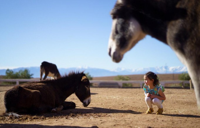 Morocco's Jarjeer Refuge Where Donkeys and Mules Go to Retire