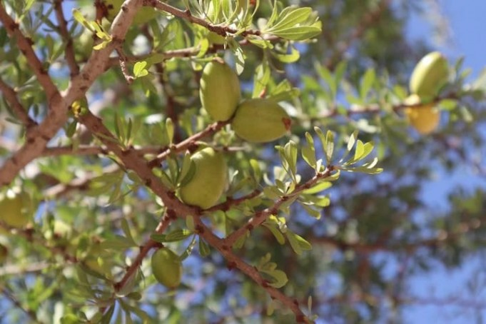 Muslim, Jewish Moroccans Plant Olive 'Tree of Fraternity' in Casablanca