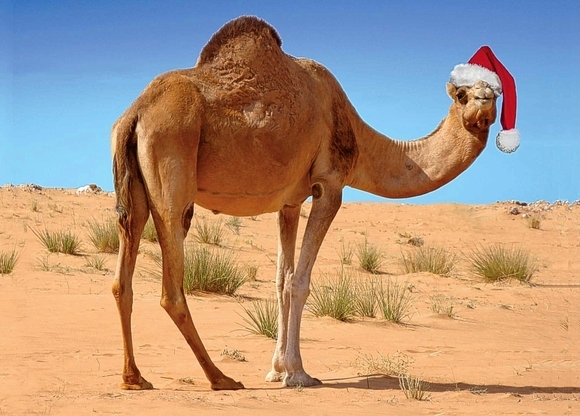 Morocco Welcomes Tourists For Christmas, New Year' Vacations