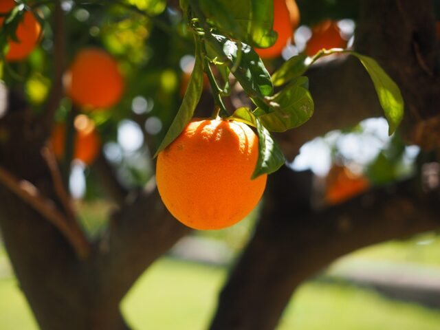 Morocco Exported 474,000 Tonnes of Fruit, Vegetables By January