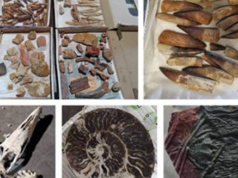 Morocco's Customs Thwarts Geological Artifact Smuggling Operation