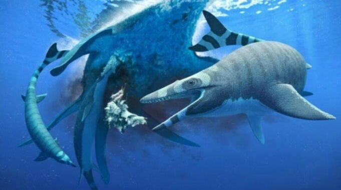 """An international team of researchers has discovered the fossils of Xenodens Calminechari, an extinct marine reptile with """"shark-like cutting teeth"""" that lived in modern-day Morocco millions of years ago."""