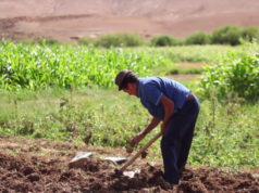 HCP More Than Half of Morocco's Employed Labor Force Has No Diploma