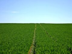 Morocco's OCP Launches New Online Service to Promote Agricultural Development
