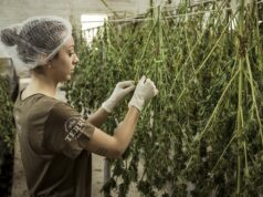 Dispelling Morocco's Five Biggest Cannabis Myths
