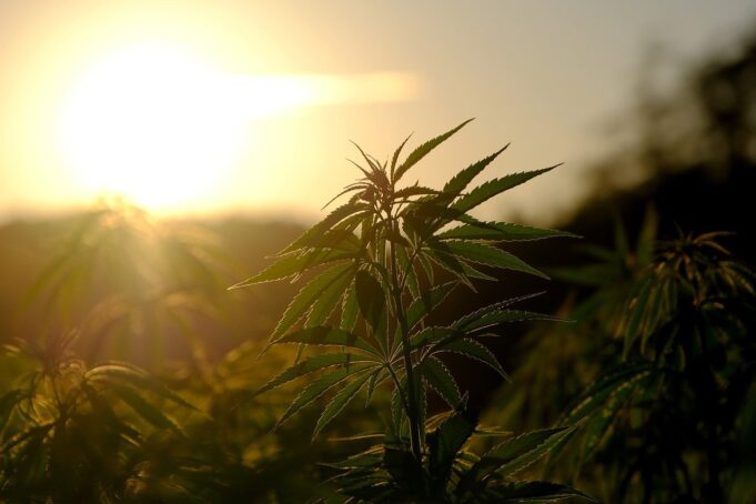 Confirmed: Morocco Will Legalize Cannabis Next Week