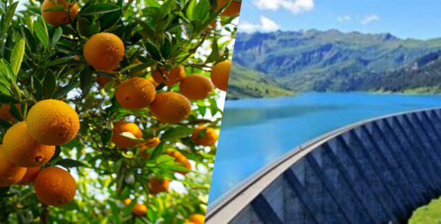Heavy Rainfall Improves Morocco's Agriculture, Fruit Exports