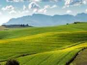 New Zealand Court Reaffirms Legality of Western Sahara Phosphates
