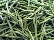 Moroccan Beans in Germany Found to Contain High Pesticide Levels