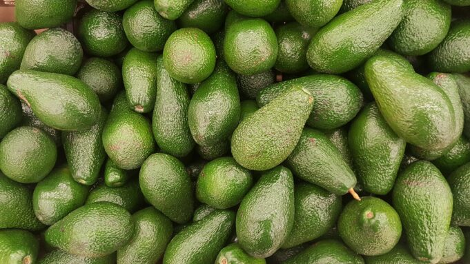 Israel's Mehadrin Wants to Plant Avocados in Morocco